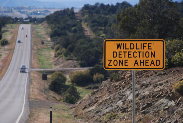 CO: Wildlife Detection System Project